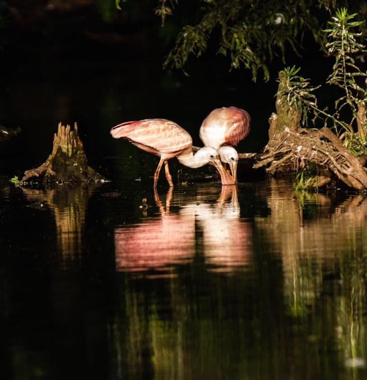 swamp-snaps-2016-039.jpg