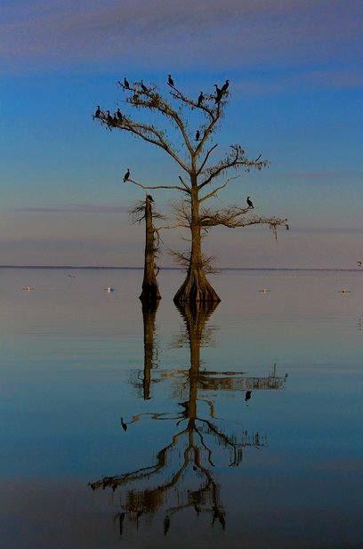 swamp-snaps-2016-050.jpg