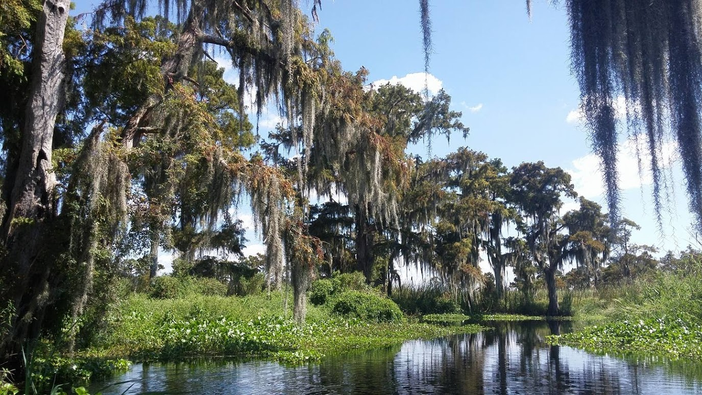 swamp-snaps-2016-052.jpg