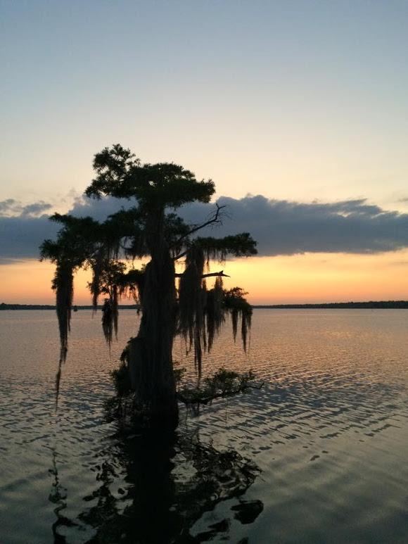 swamp-snaps-2016-072.jpg