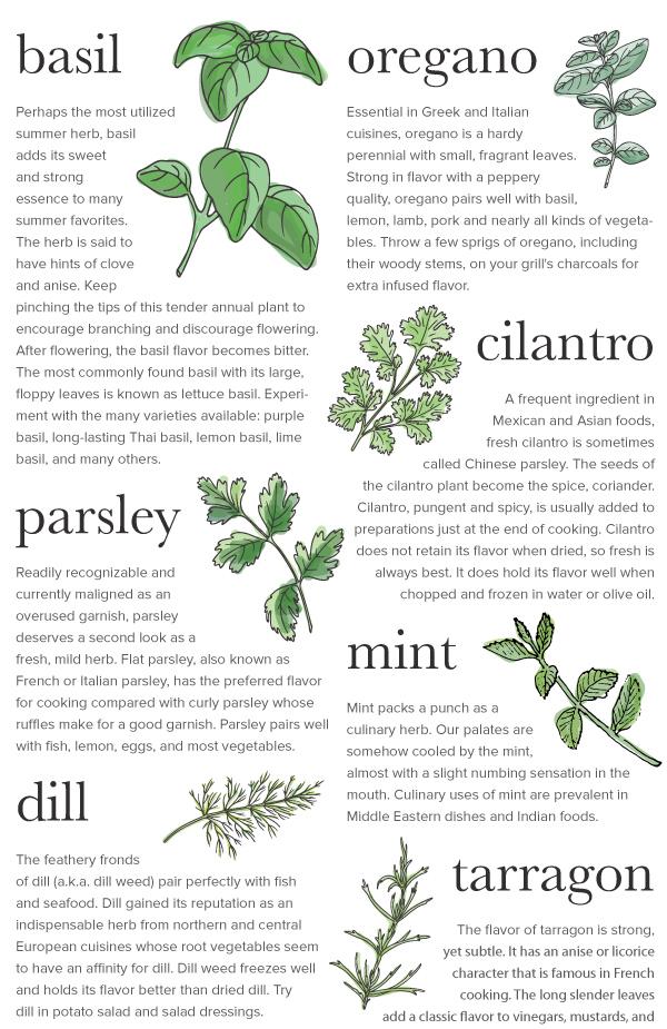 Herbs_v1_07.jpg
