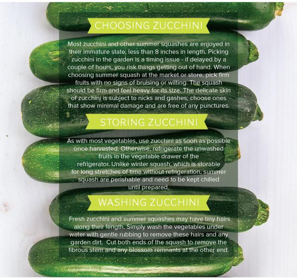 Zucchini_v1_08.jpg