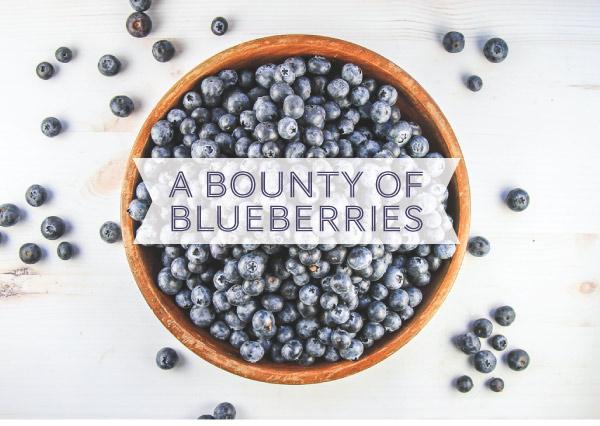 Blueberries_v2_01.jpg