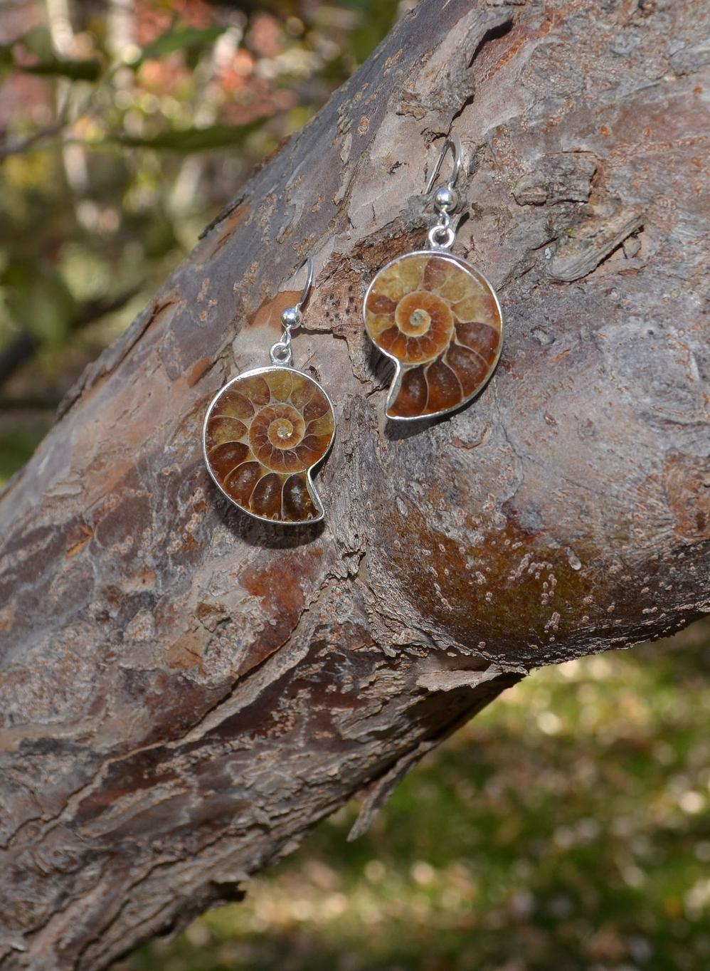 ammonite ears #5 on tree.jpg