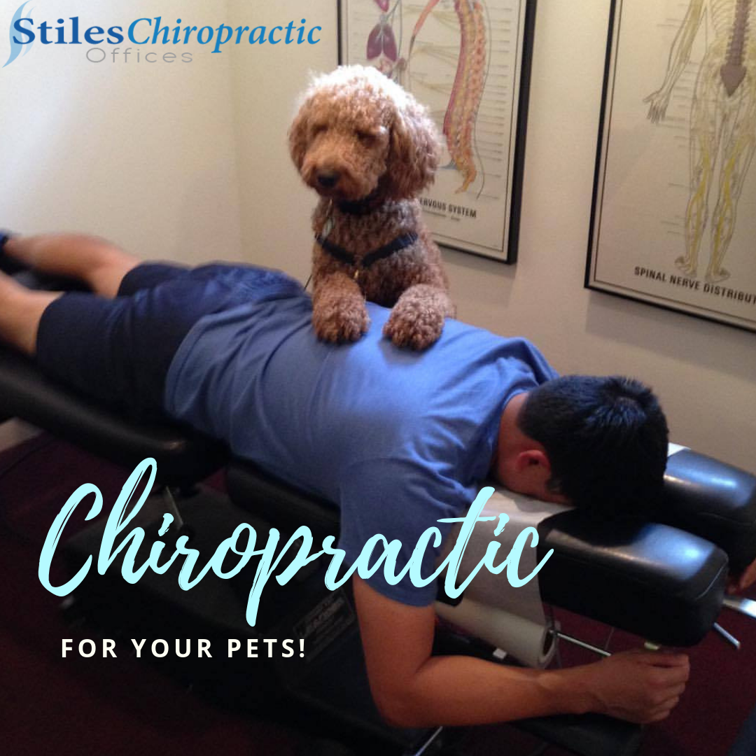 stiles-chiropractic-pets.png
