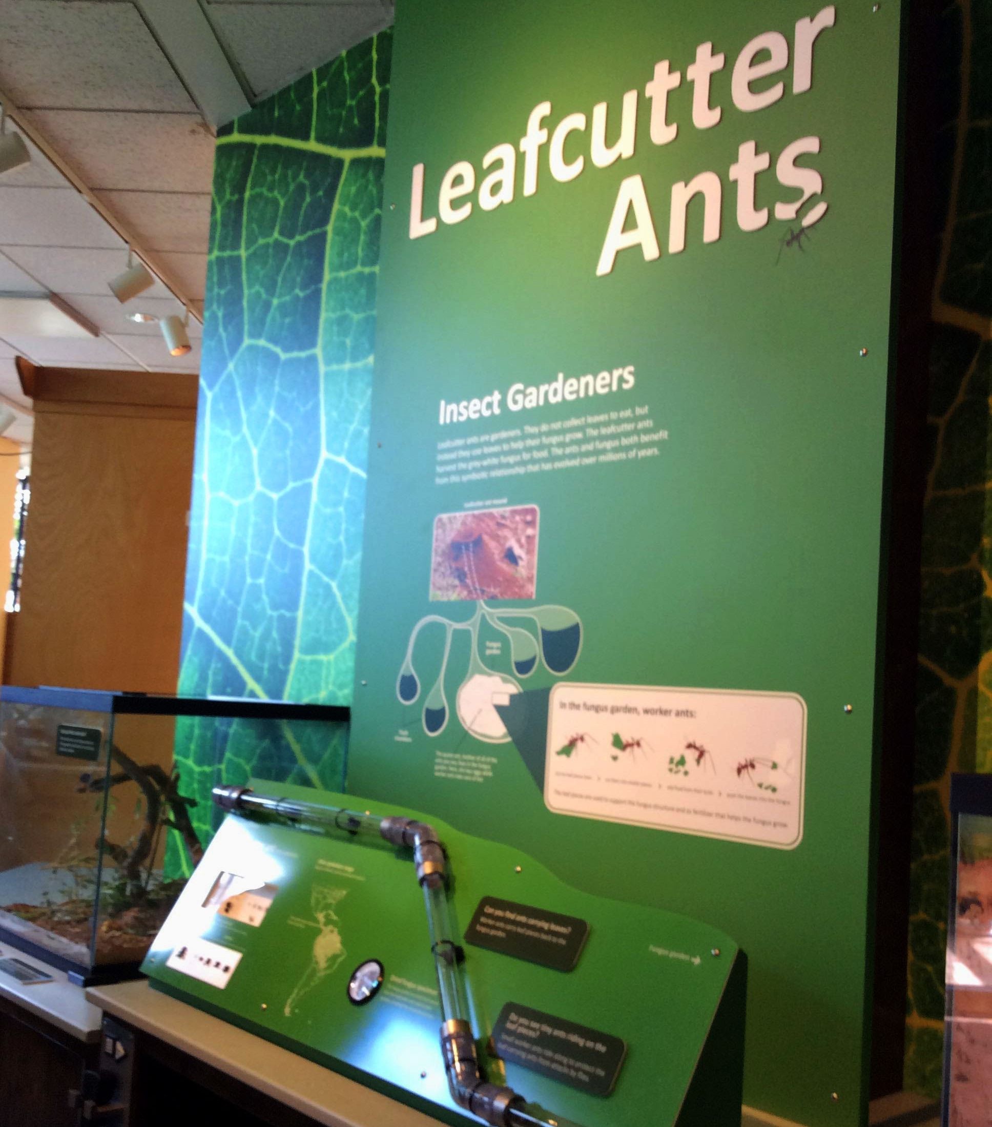 Leafcutter Ants — Museum of Science, Boston