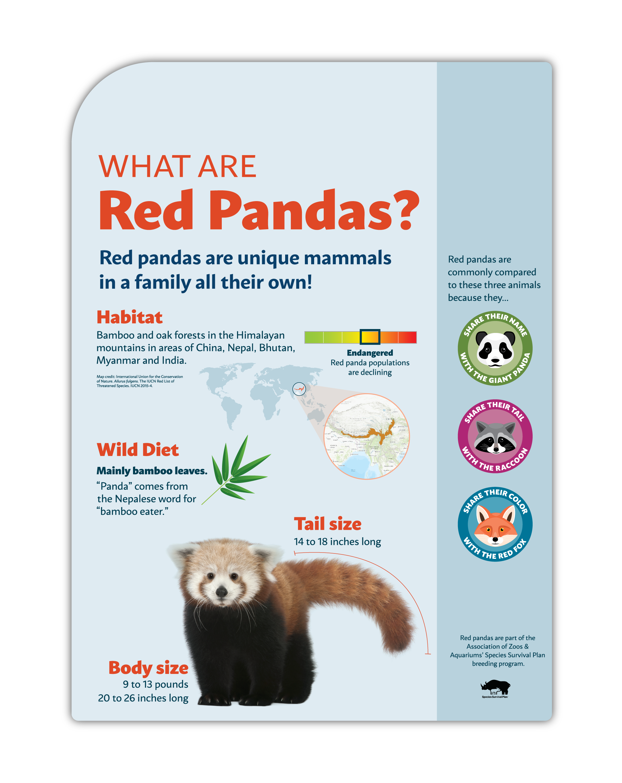 Detroit Zoo Red Panda Graphic Panel