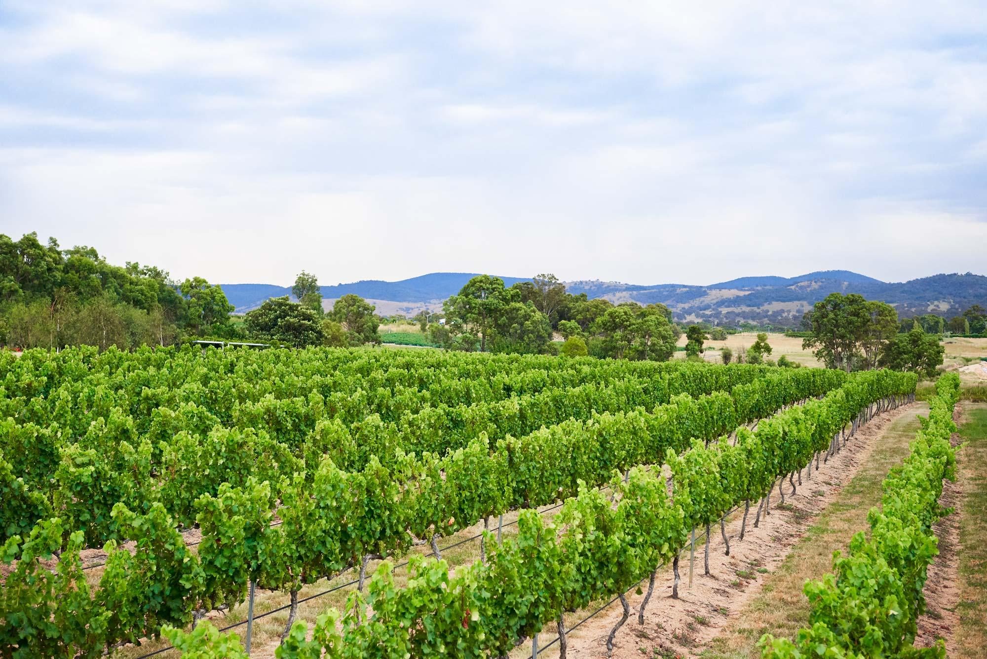 Tobin-Wines-Granite-Belt-winyard.jpg