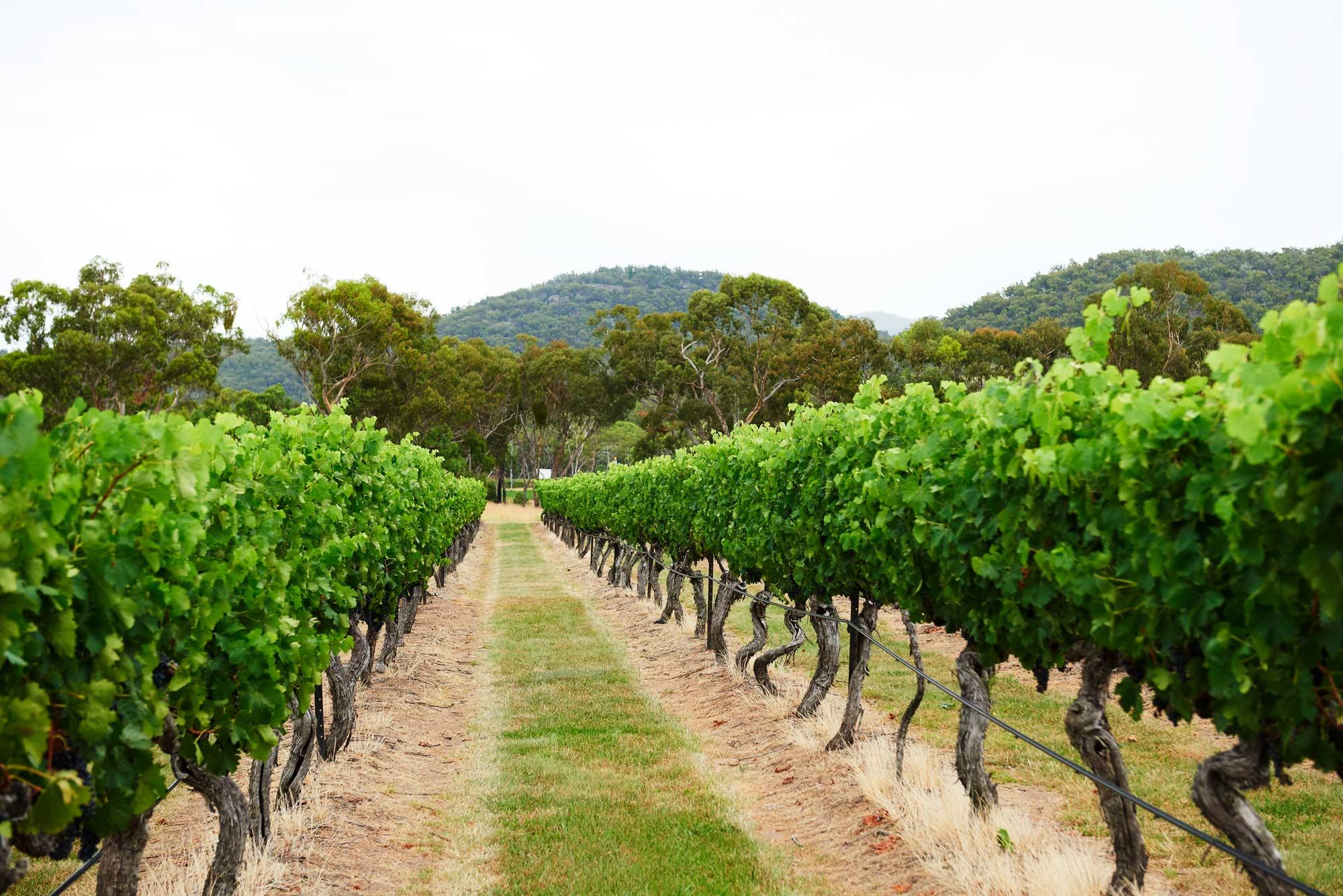 Tobin-Wines-Vinyard-Slider.jpg