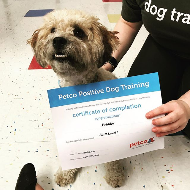 Keeping on brand, this Vinokor does extra credit! #prouddogmom #petco #extracredit