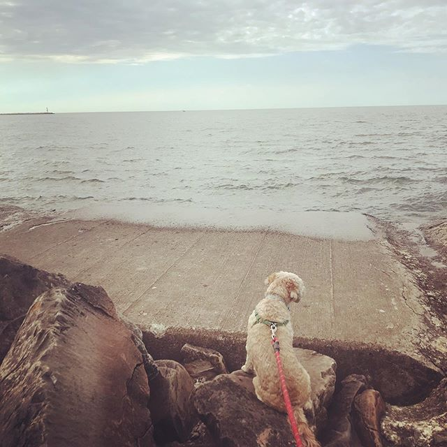 Contemplative Princess Pebby channeling a seal #cleveland #lakeerie #doggymommy
