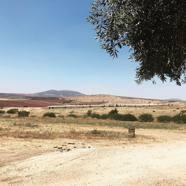 The best views at #beithashita are apparently from the cemetery...#kibbutz #israel #emek #gilboa