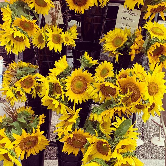 Sunflower Sunday = best Sunday #sunflower #weekend #farmersmarket #chagrinfalls
