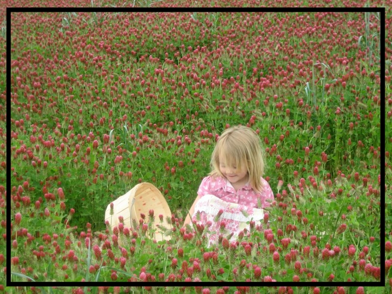 Téa crimson clover cover crop.jpg
