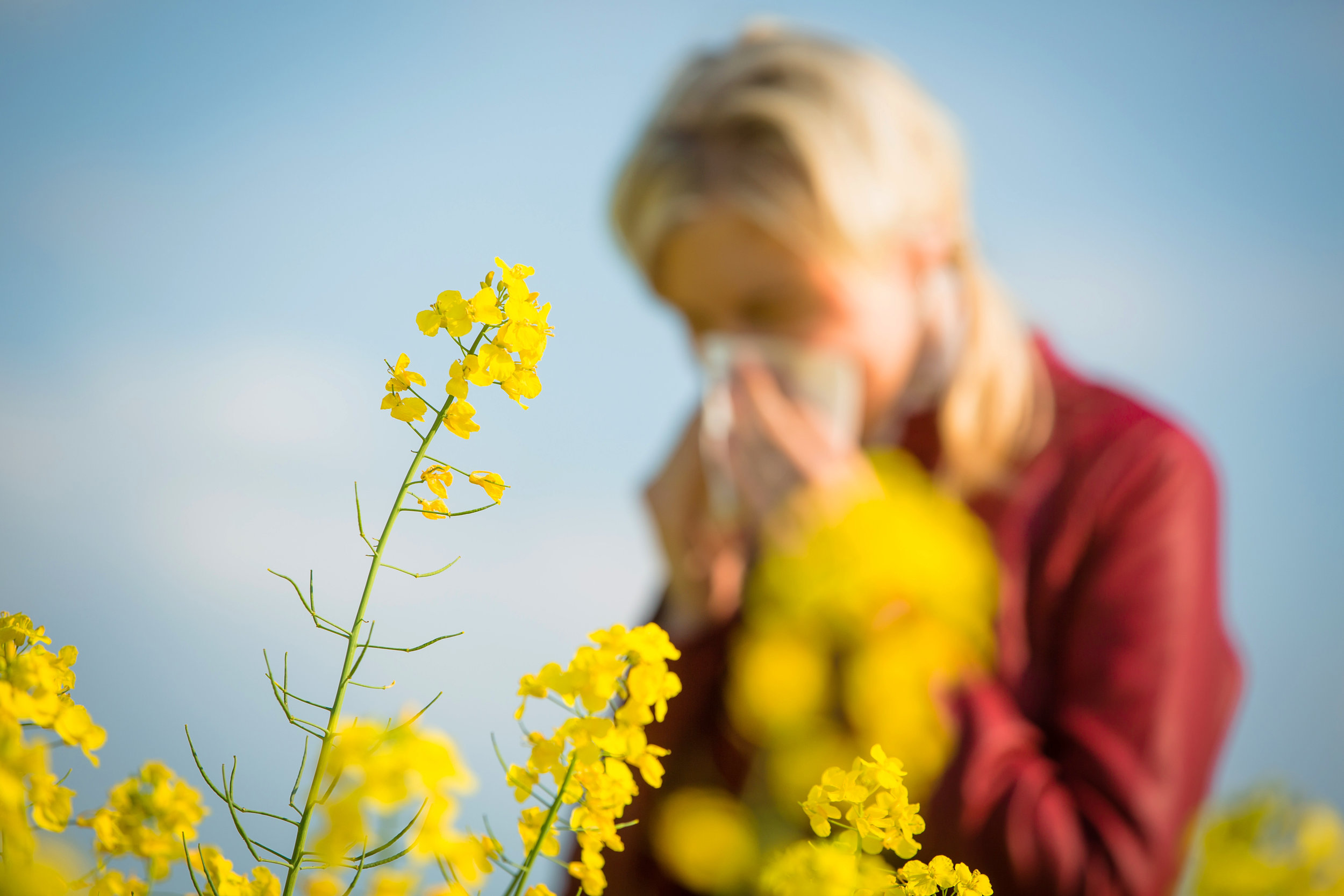 Are you allergies driving you crazy?  - Let Five Star help you enjoy cleaner air and lower utility bills all throughout the year!