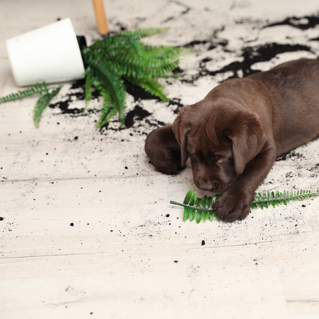 - Indoor plants are a great addition to any room in your home, but always make sure they are safe for any pets you have in your home.