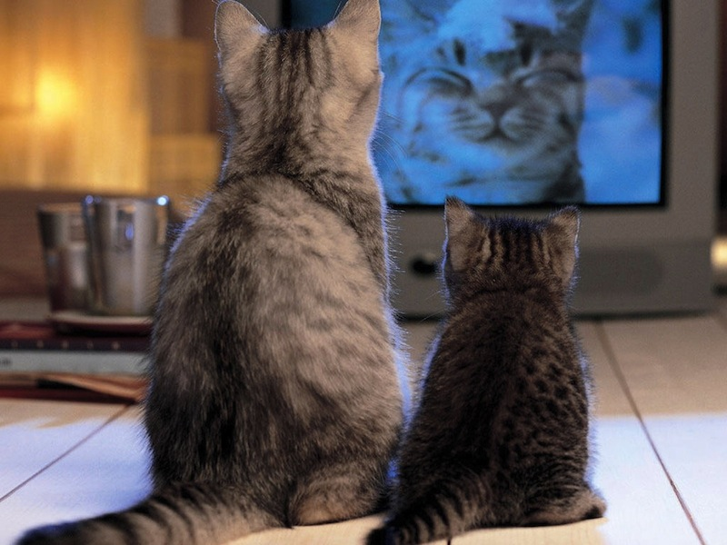 cats_watching_tv-normal.jpg