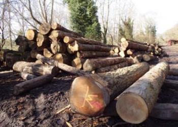 Sawn logs waiting to be sawn