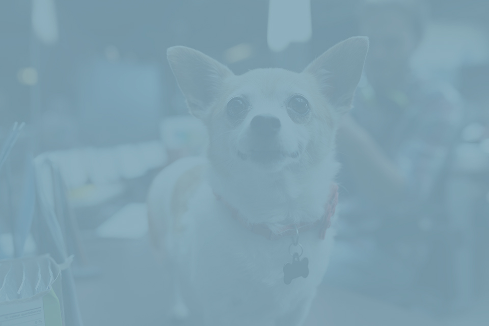 Consulting with experts allows you to gain access to valuable information. - We have knowledgeable experts that can answer your questions about animal-assisted therapy techniques and interventions, including how to set up your own animal-assisted therapy program.