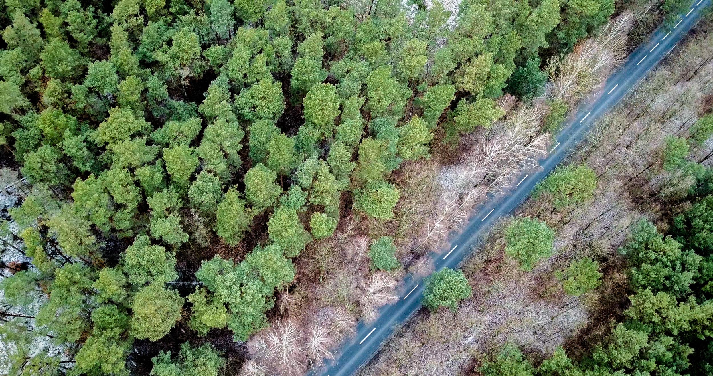 woodboomBLOG - ein Einblick hinter die Kulissen von woodboom und Partnern