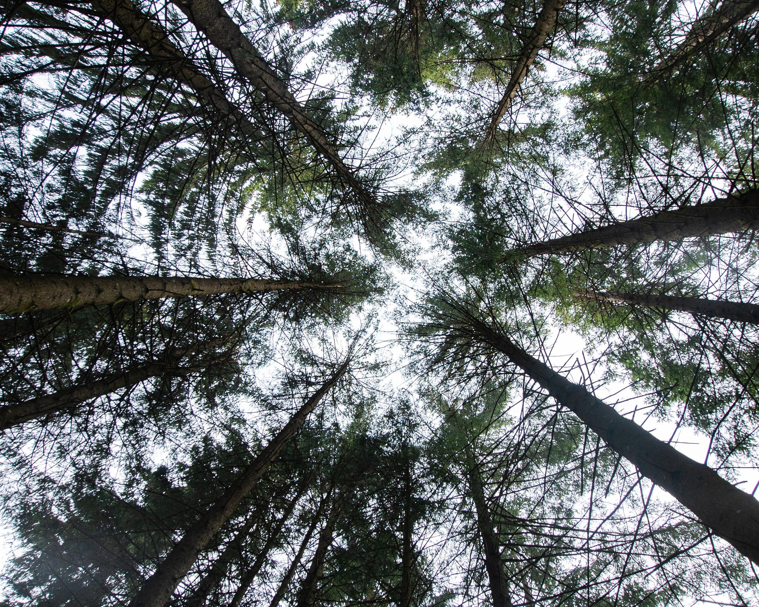 Holz - Kiefer I Eiche