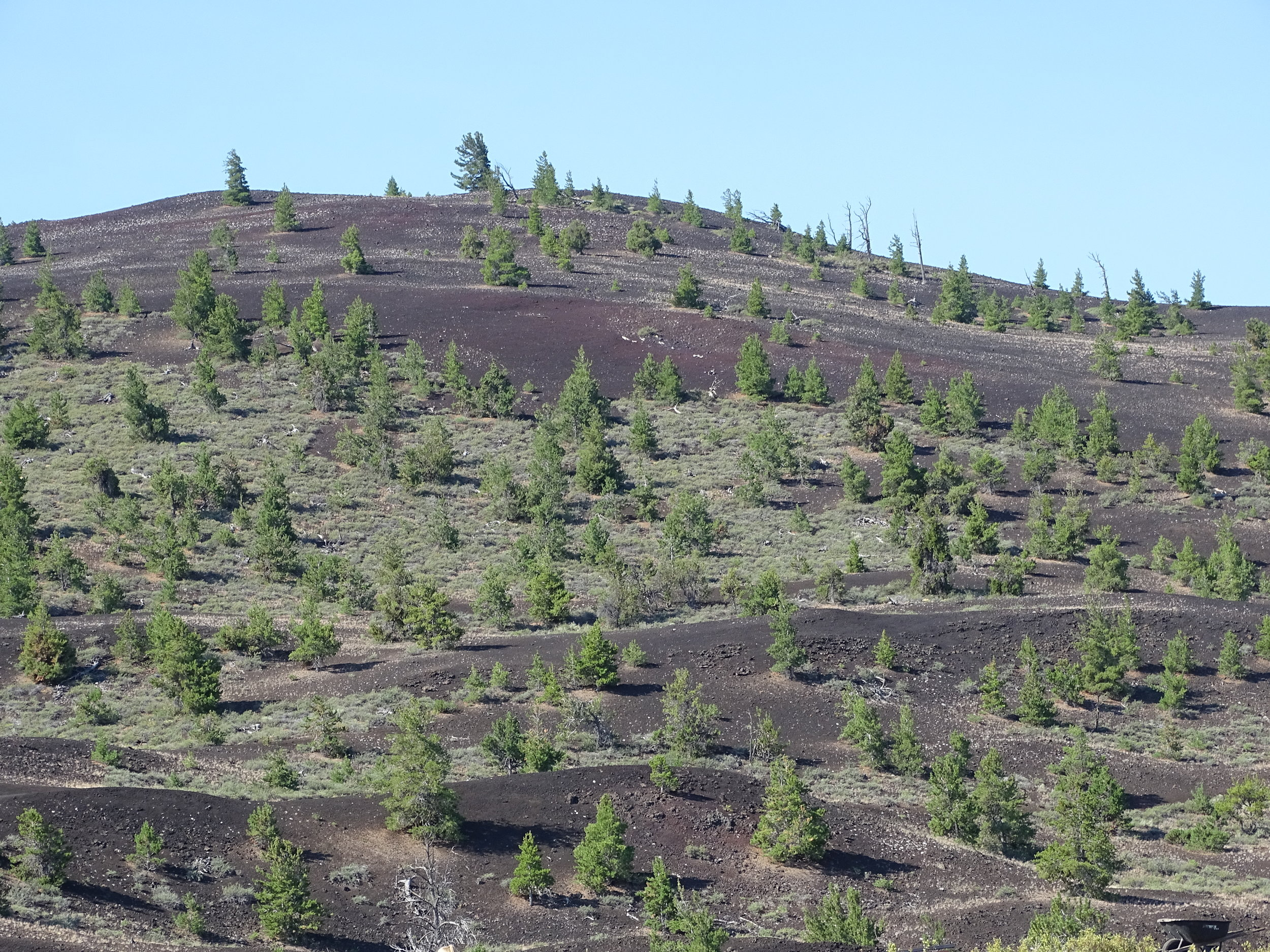 I just loved the contrast of the green and black form the volcanic cinder