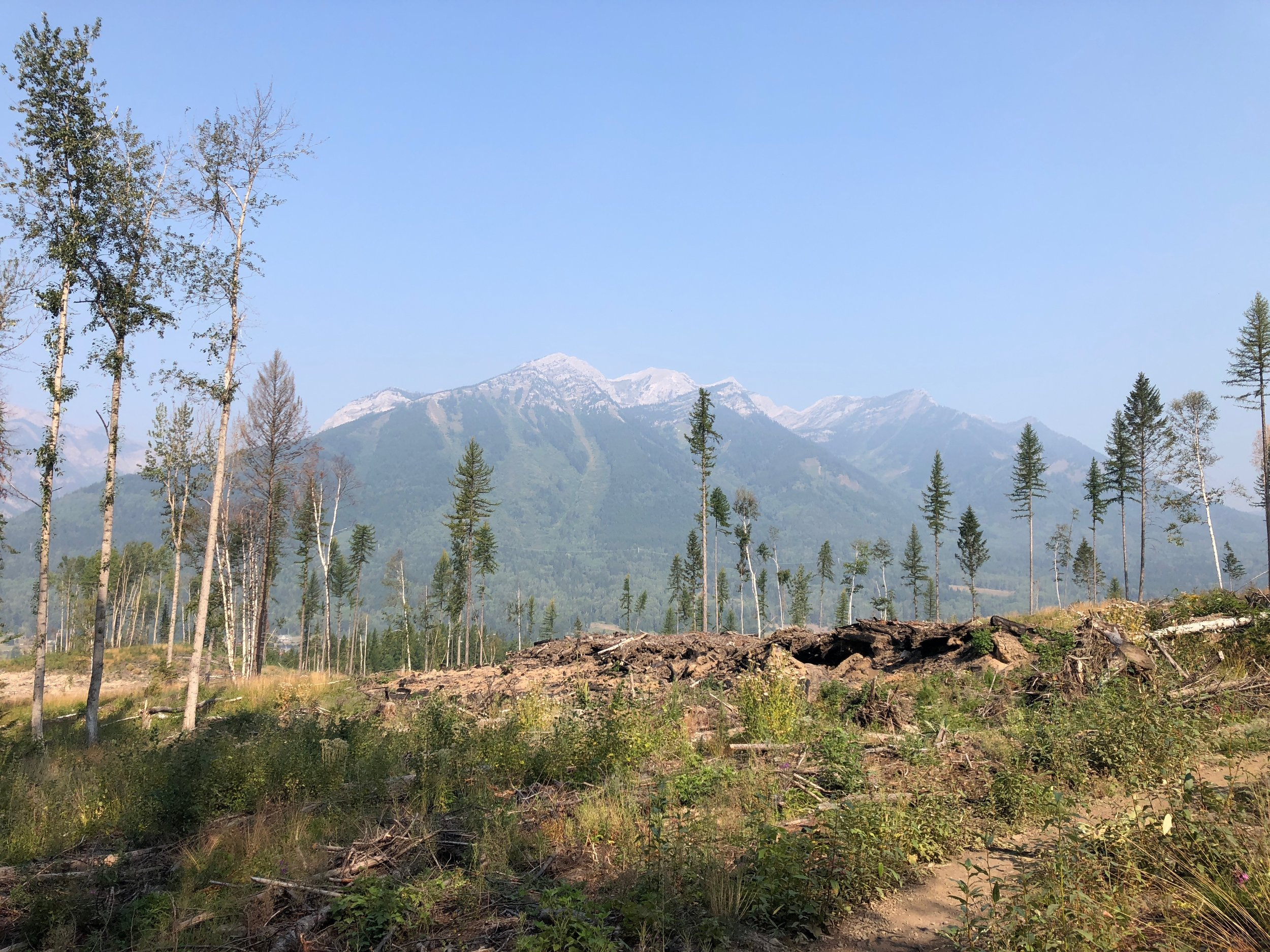 A view of the mountains from a trail in Fernie