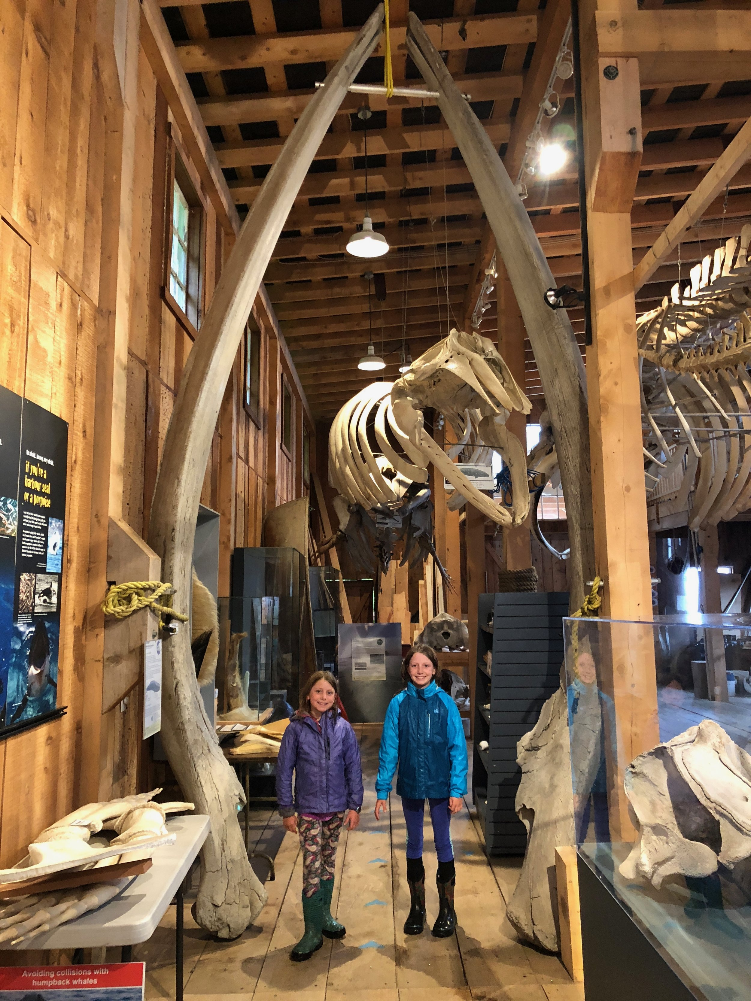 The girls at the Killer Whale Interpretive Center staring in the the middle of two ribs of a whale