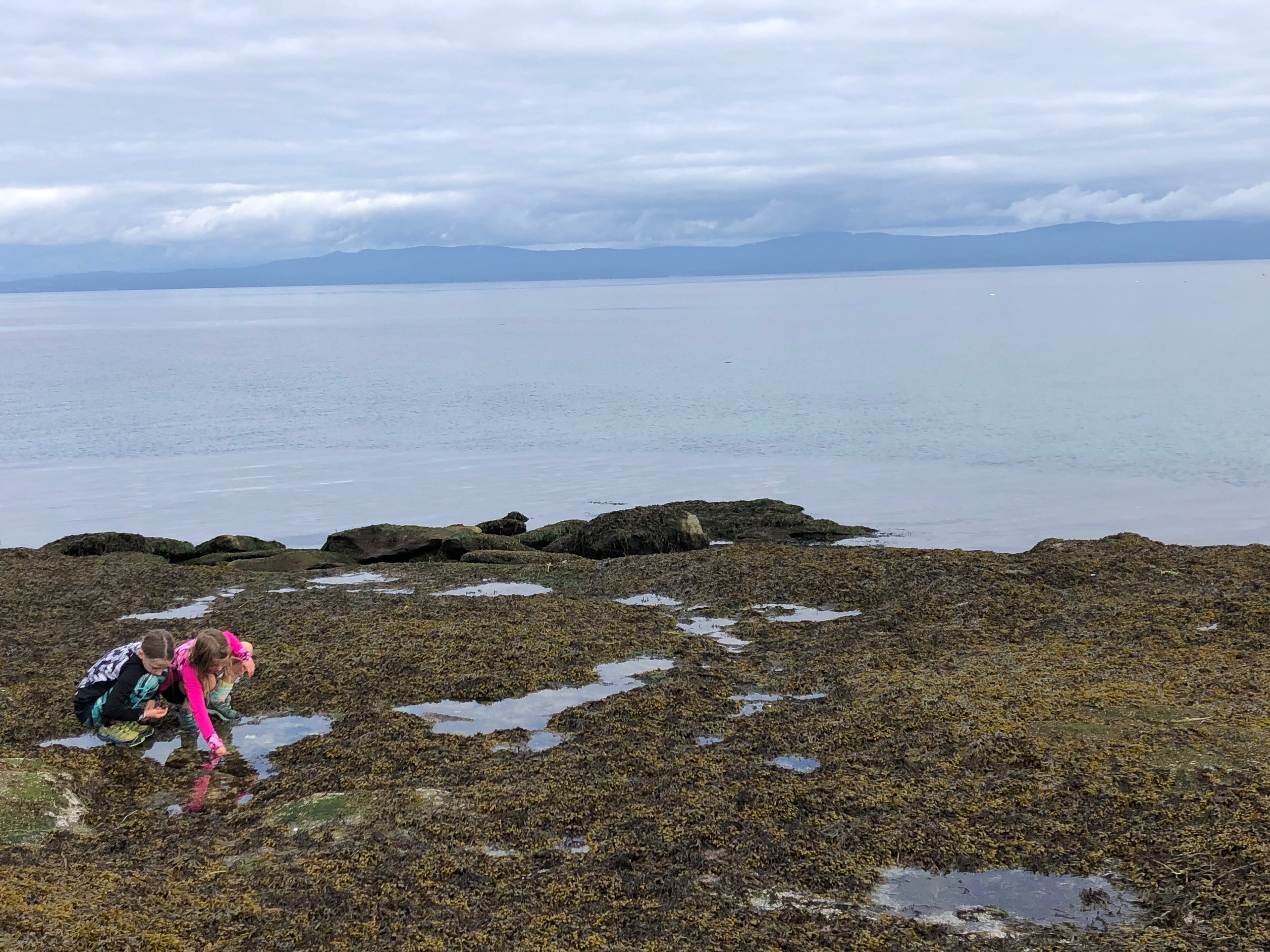 The girls enjoyed exploring the tide pools - we saw sea anemone, crabs, starfish and a beautiful grey heron