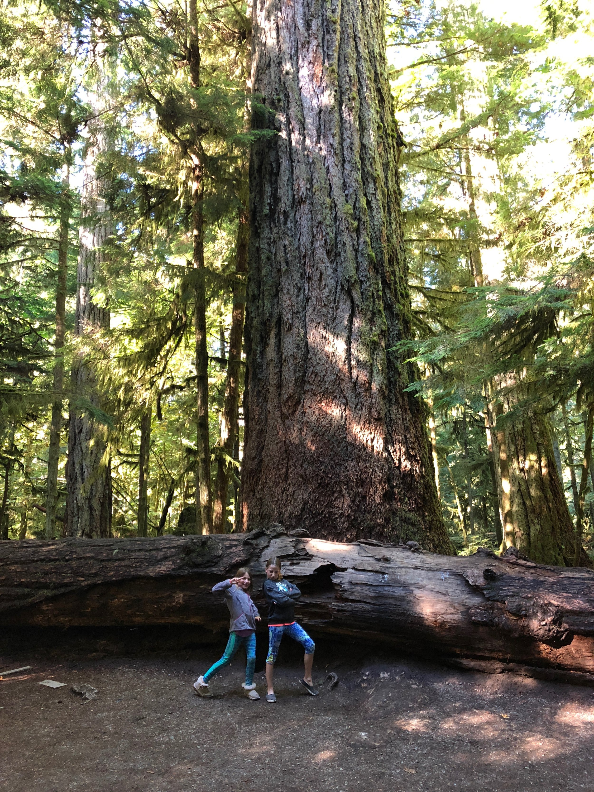 The girls in front of the big Douglas Fir tree in Cathedral Grove