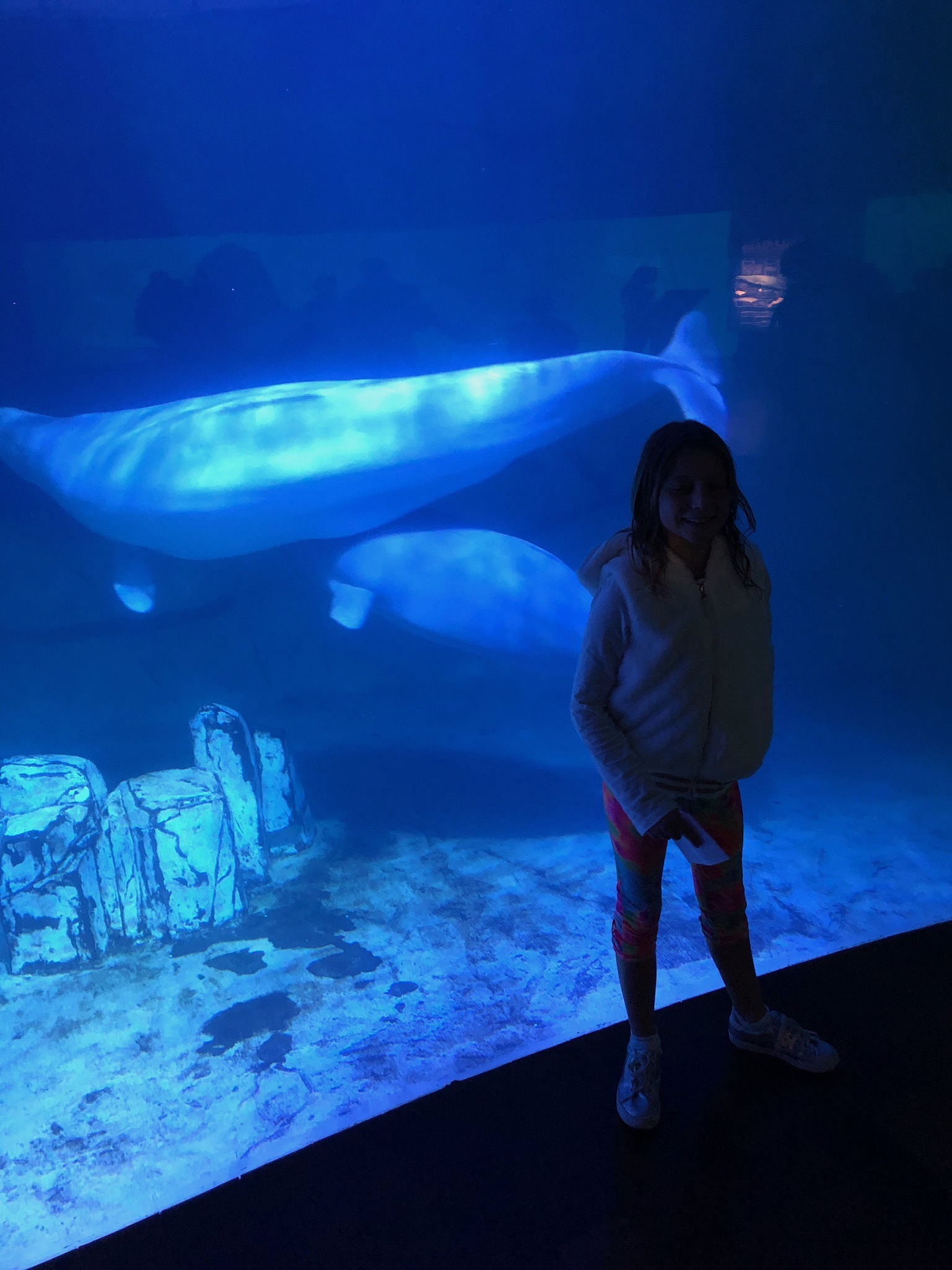 Isla in front of the beluga whales