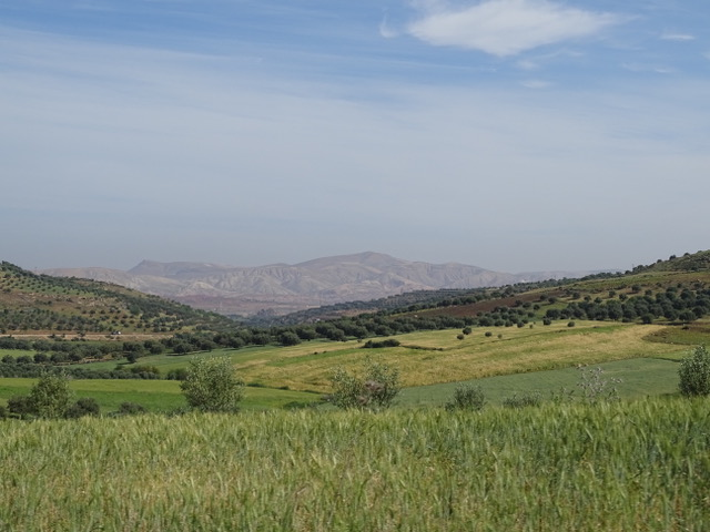 A view from the car leaving Fez