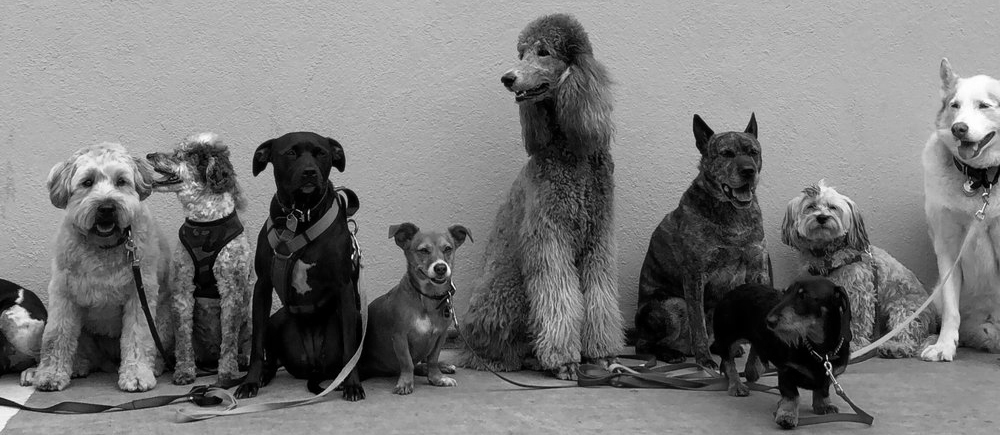 dogs-against-the-wall-black-and-white.jpg