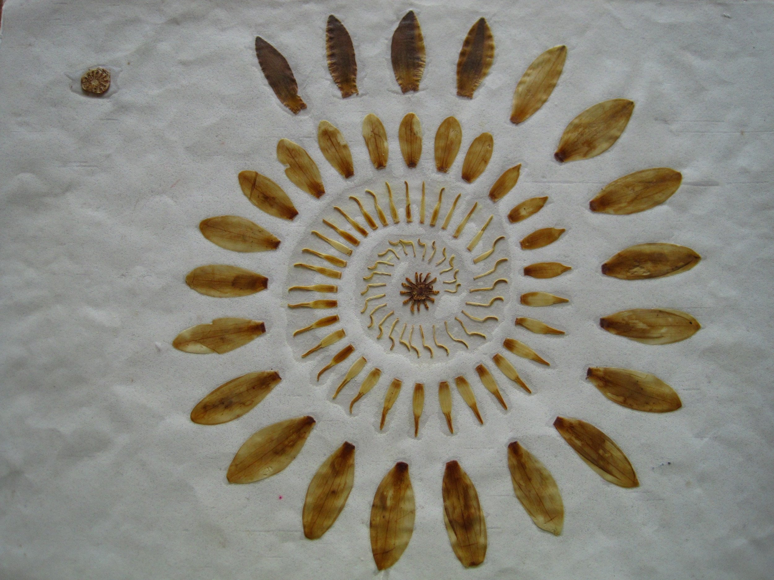Leaf sequence