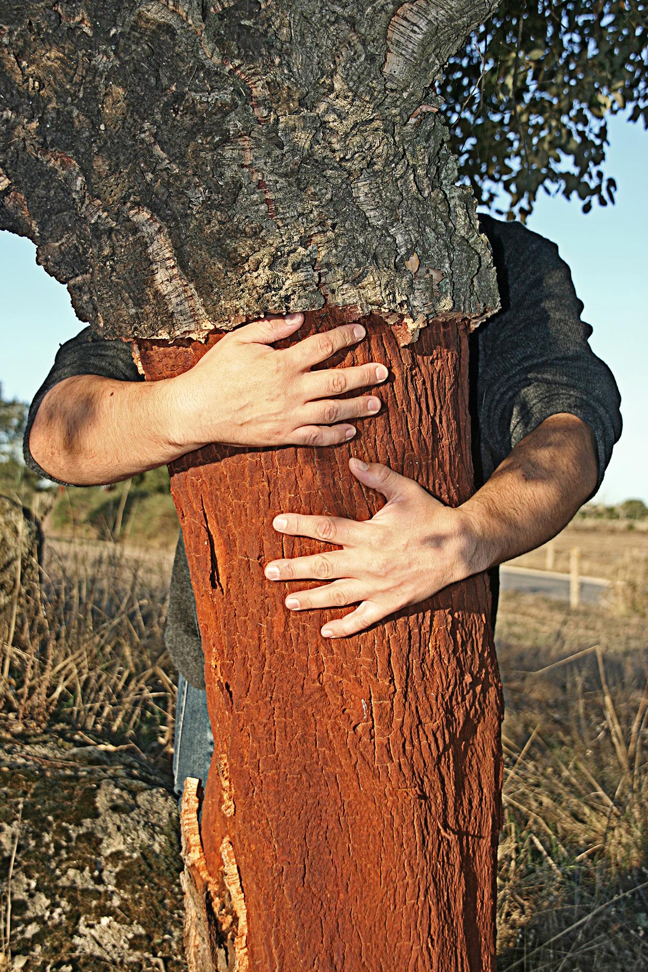 arbre_mans.jpg