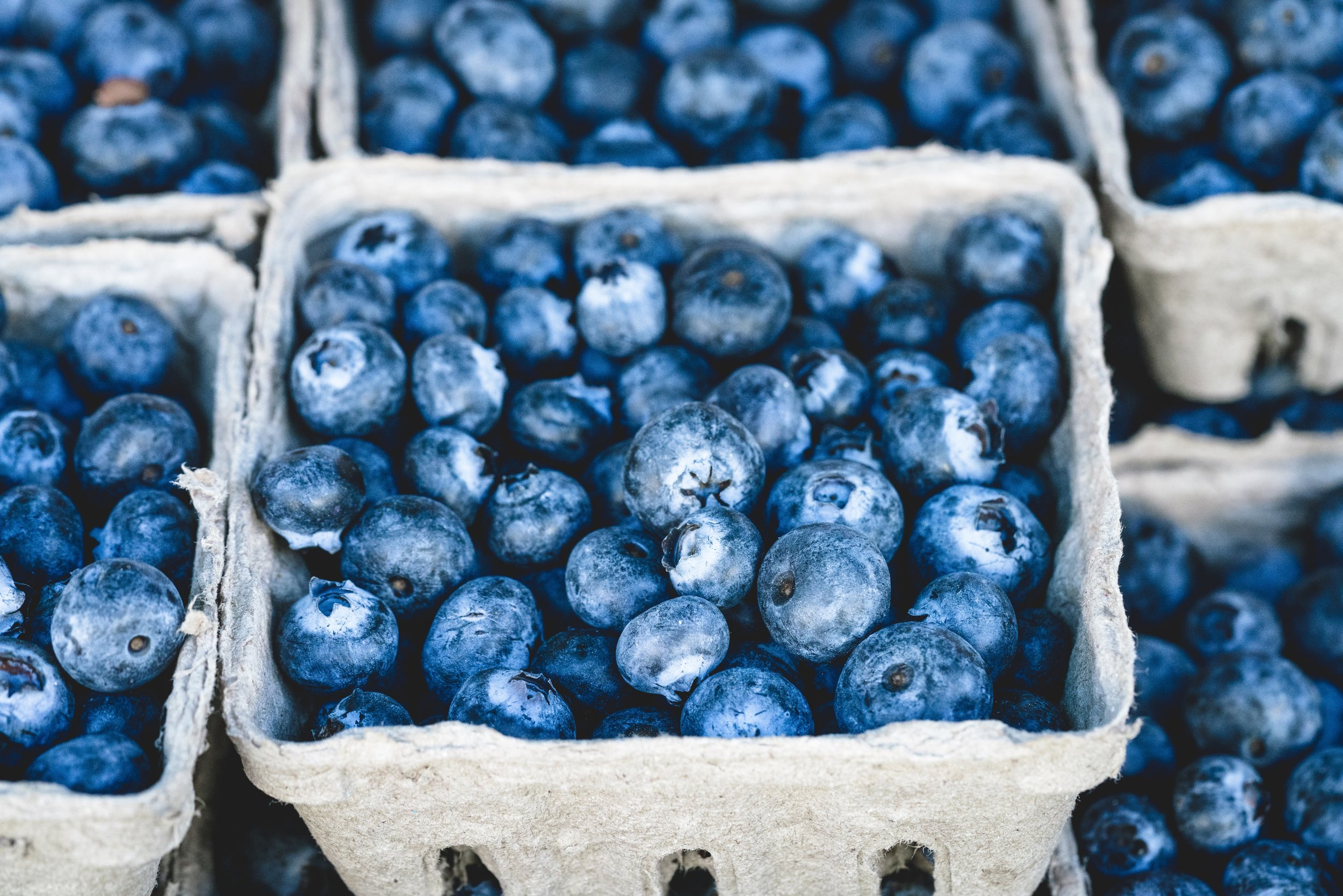 cartons of fresh Maine blueberries