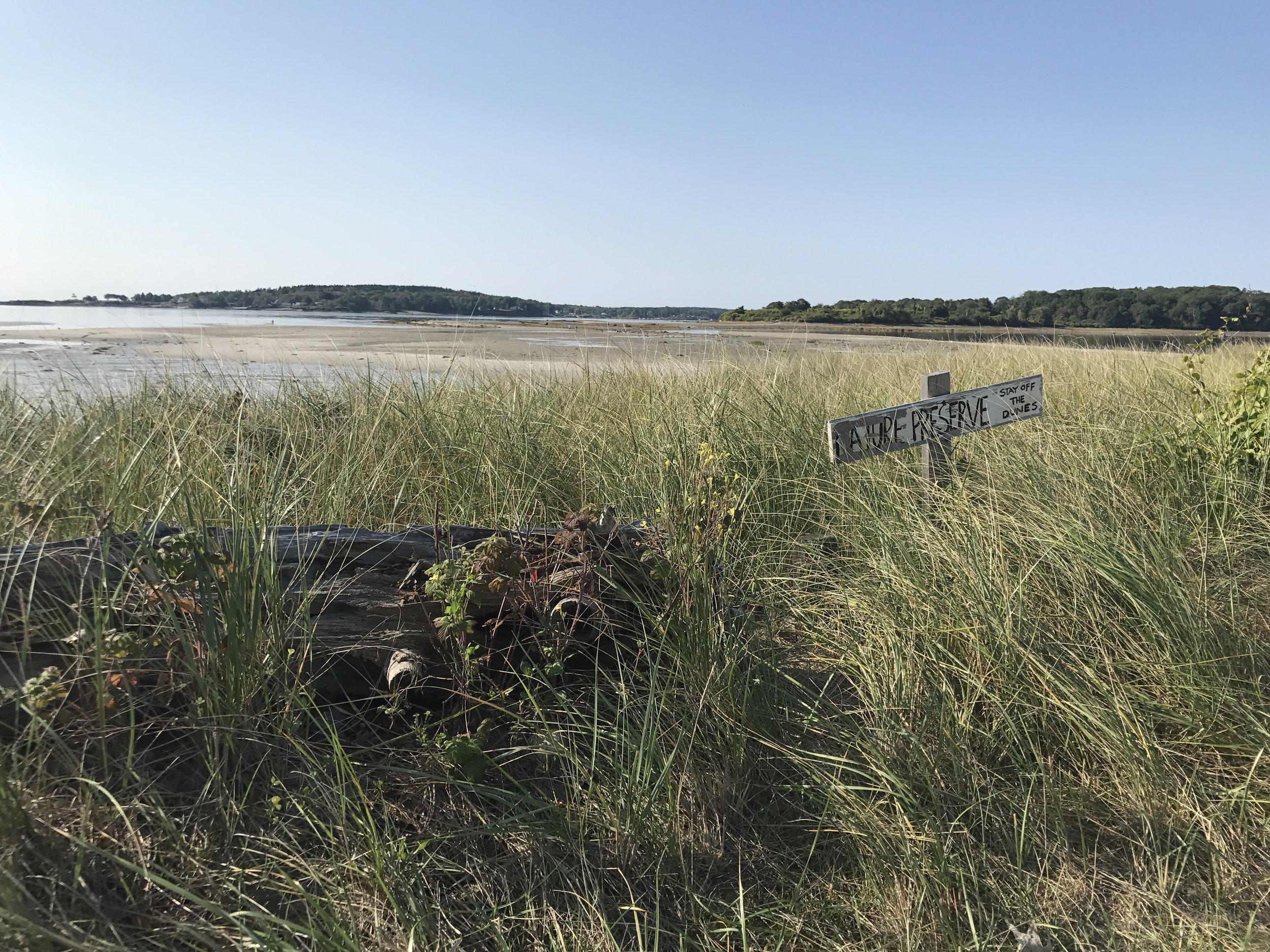 trails through dune grass on beach