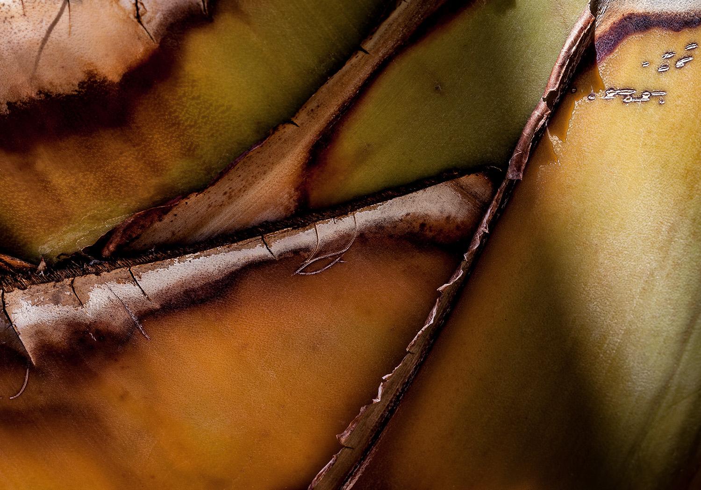 Palm Pattern 4