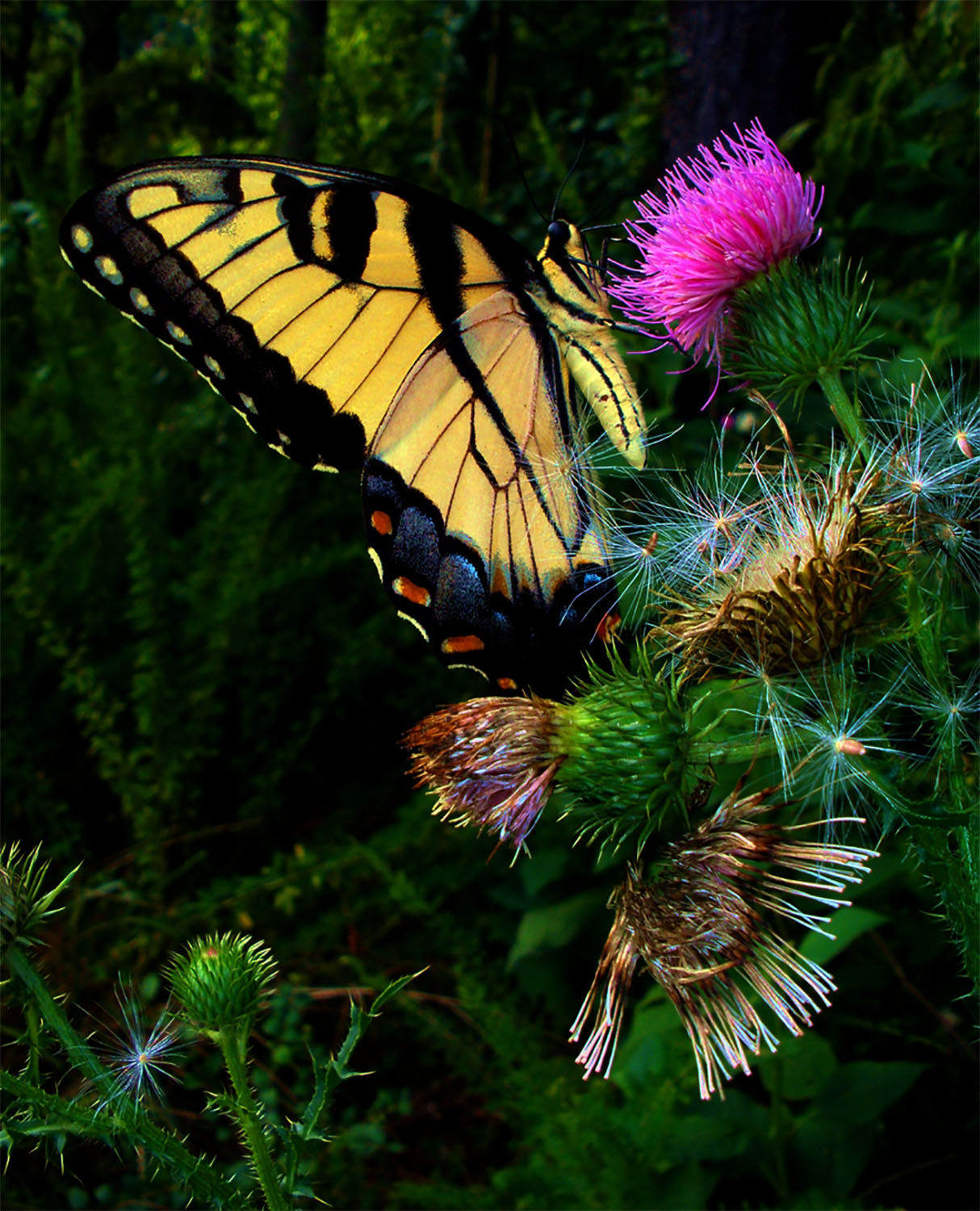 19. butterfly on nectar, by k. bos