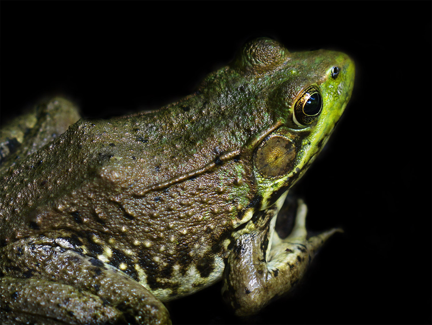10. frog pose, by k. bos