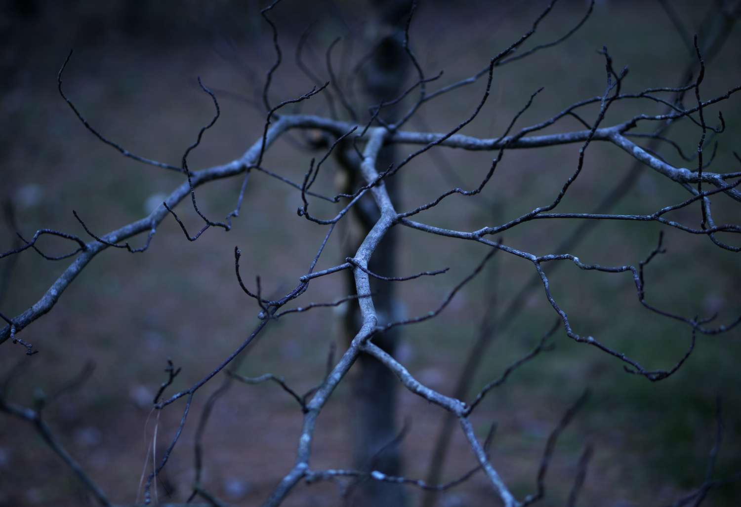 35. dancing limbs, by k. bos