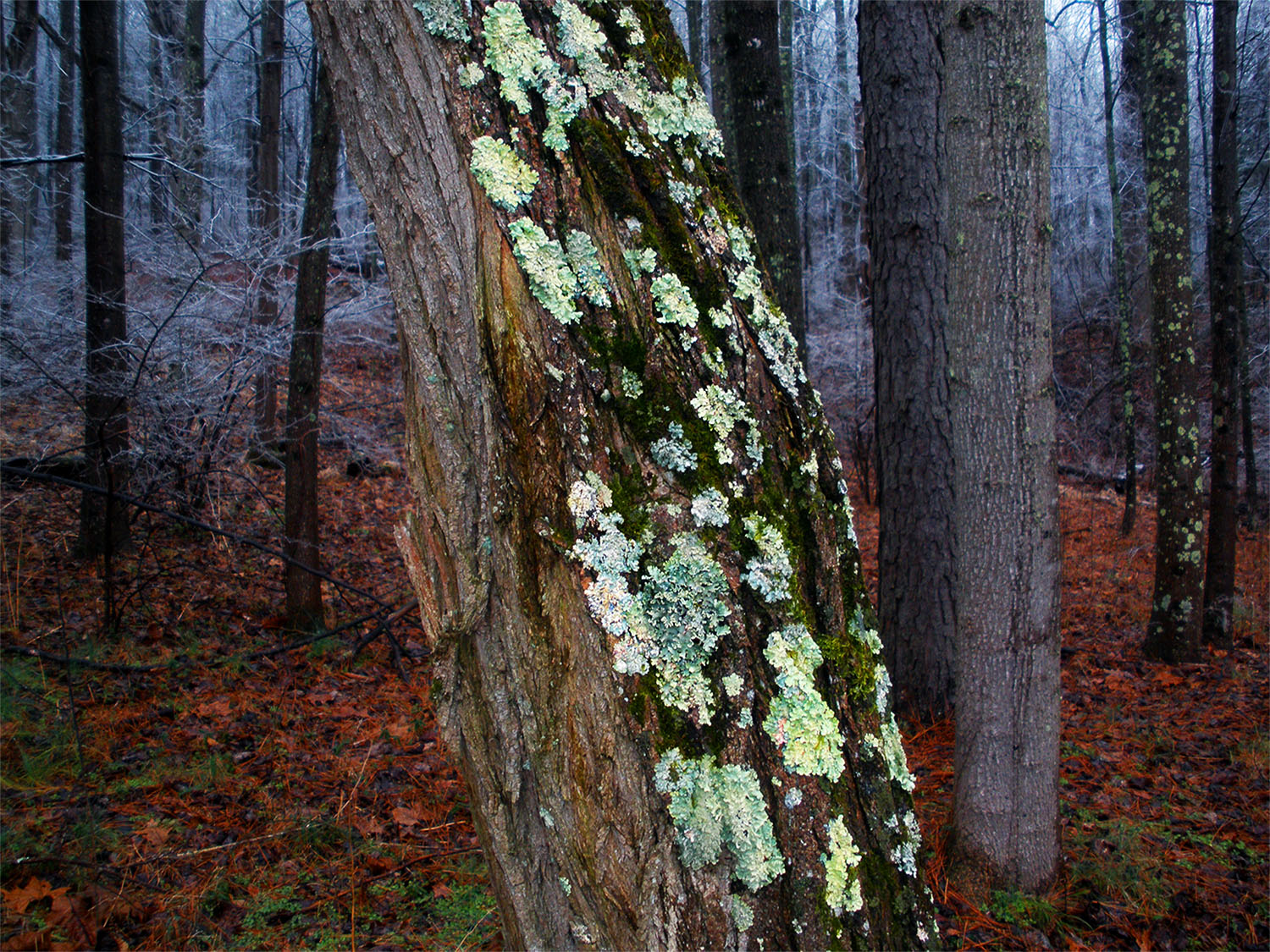 22. of ice and lichen, by k. bos