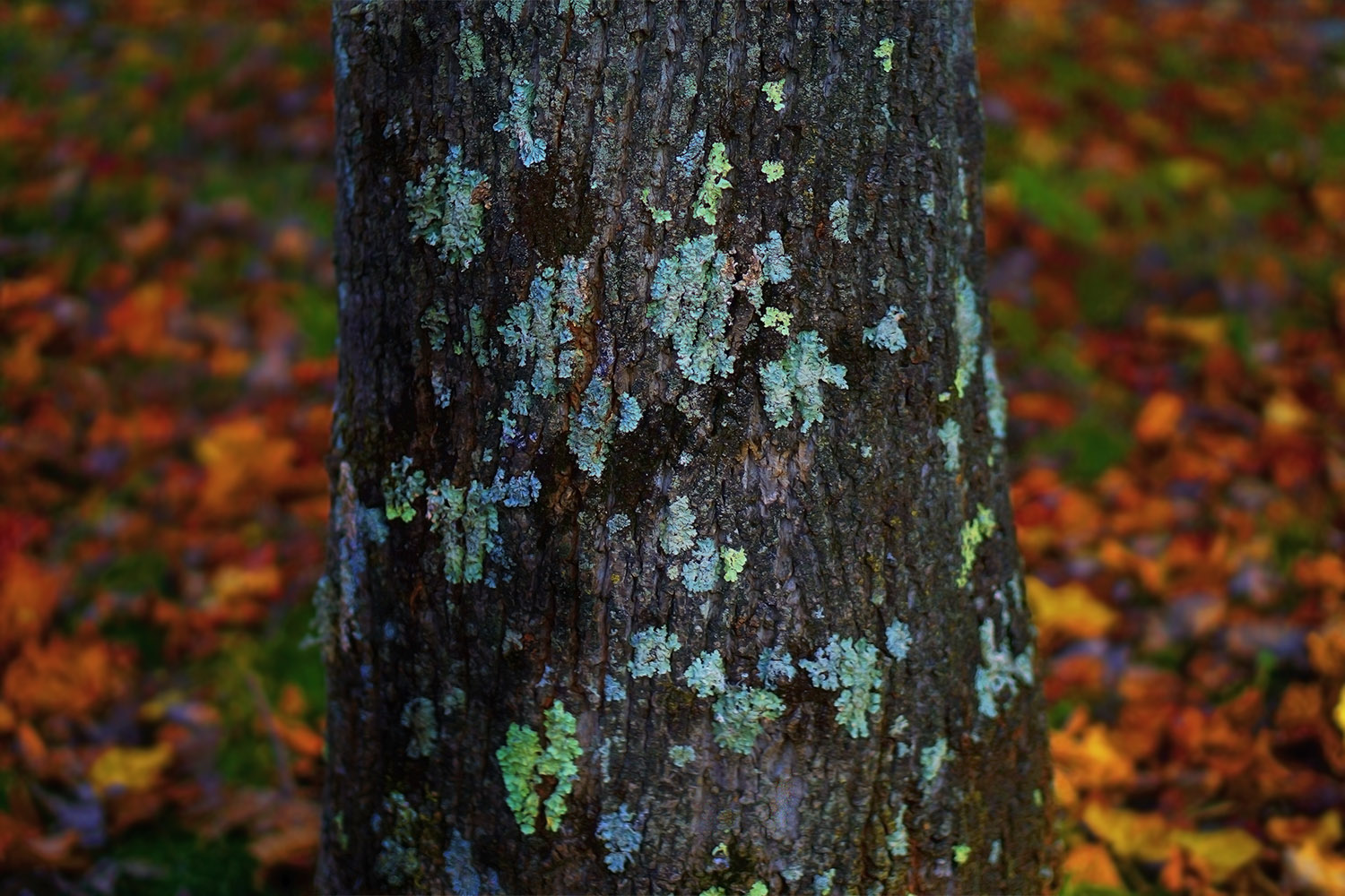 36. leaves and lichen, by k. bos