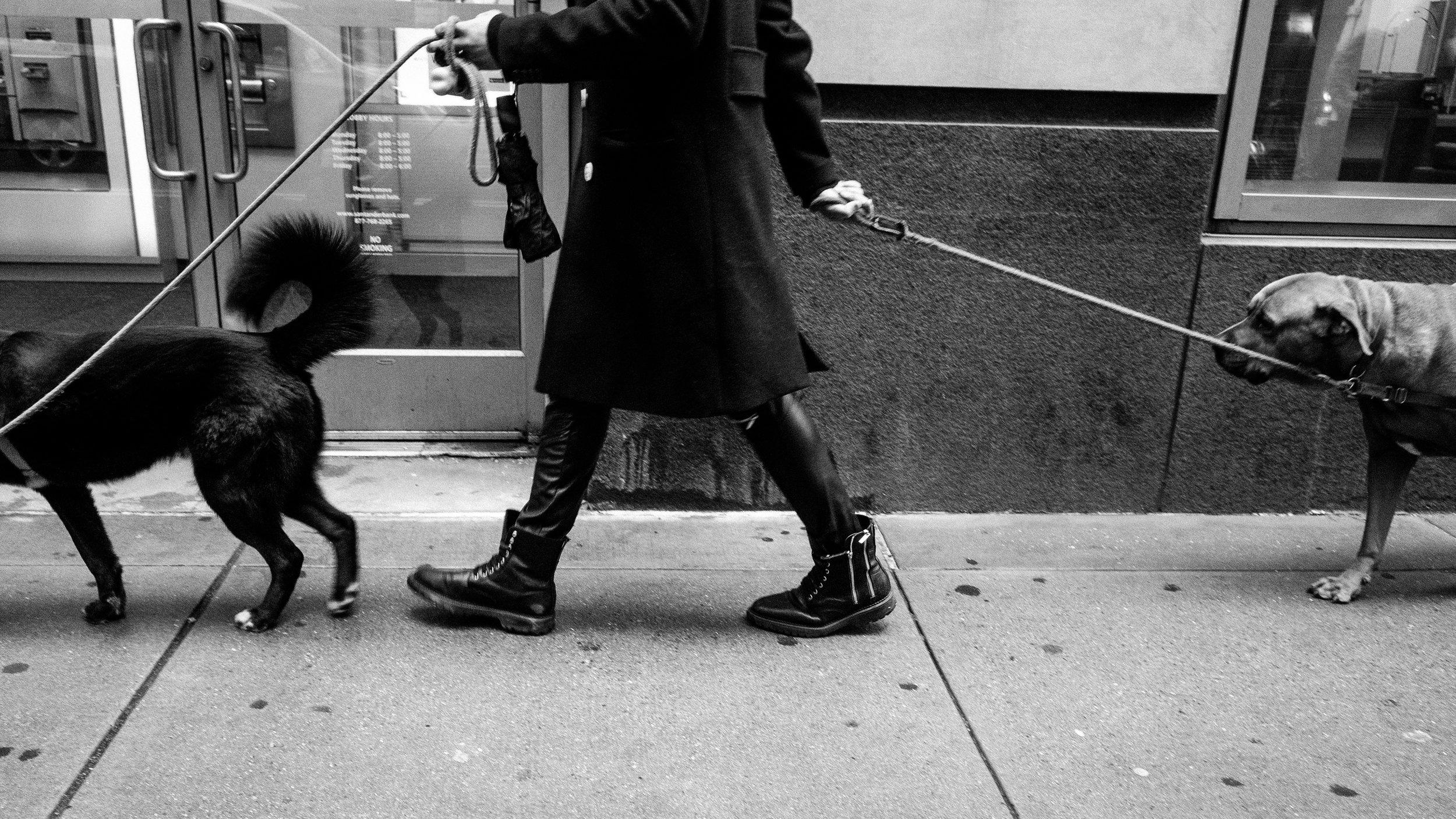 dog walking you .jpg