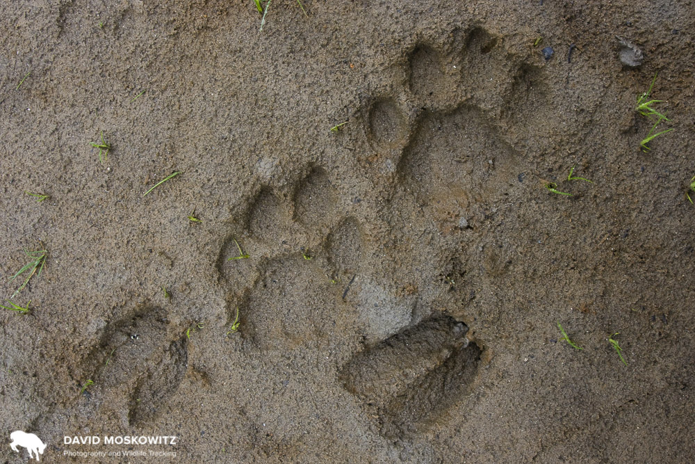 Wildlife Consulting - Wildlife Tracking, Camera Trapping, Citizen Science