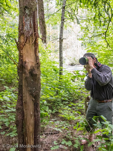 Terry Kem, founder of Deerdance, earned a Level III Cerftication as well on the evaluation, seen here photographing a sign post tree well used by black bears along Thunder Creek.