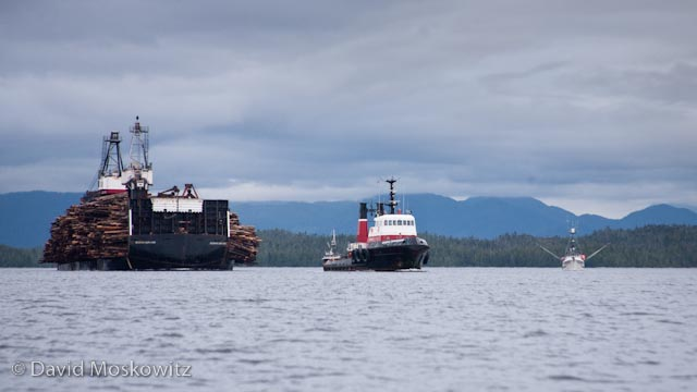 Tug pulling a barge loaded with rainforest trees, dwarfing a fishing vessel to the right.