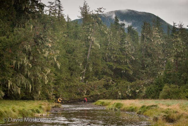Two men dwarfed by the rainforest they are about to enter. They were out counting fish carcasses along the stream to determine the number of salmon returned thus far for the Heiltsuk Nation's Fisheries Program.