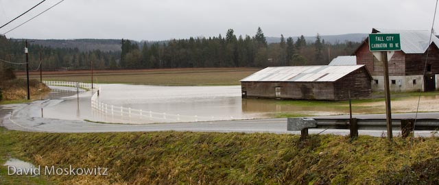 Flooded farm field south of Carnation caused by a burst levee on the Tolt River.