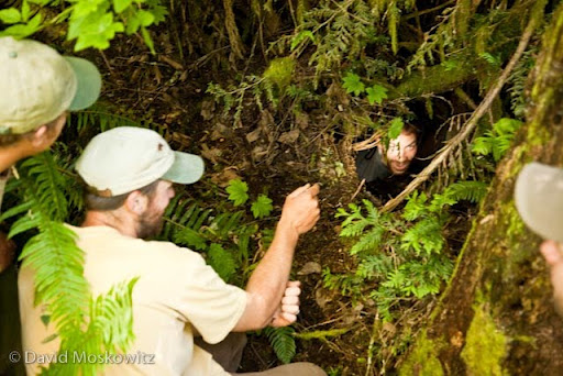 Naturalist Marcus Reynerson inspects a black bear den discovered by David Scott who looks on along with Gabe Spence and Brian McConnell. Western Washington.